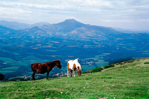 Pottok Pays basque